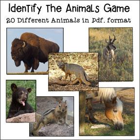 Identify the Animals Game