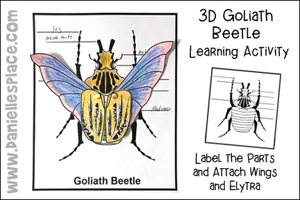 Label the Goliath Beetle Activity Sheet